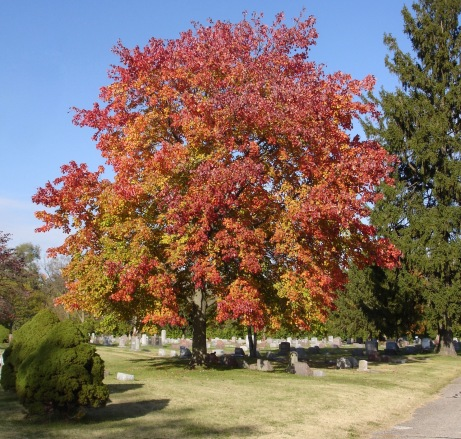 tree in cemetery in autumn