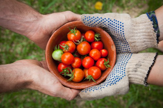 two pairs of hands share a bowl of cherry tomatoes